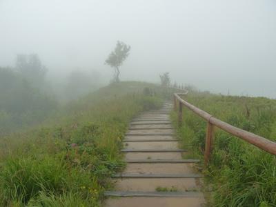 escaliers dans la nature