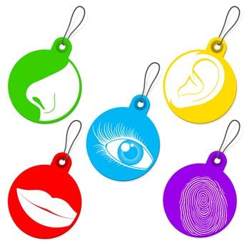 Visuel, auditif ou kinesthésique ?
